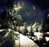 Weihnachten, magischer Wald Stockfotos