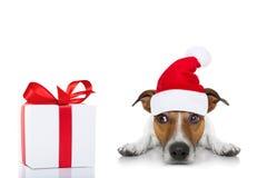 Weihnachten Santa Dog Lizenzfreie Stockbilder
