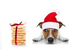 Weihnachten Santa Dog Stockfoto