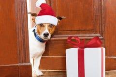 Weihnachten Santa Dog Stockfotografie