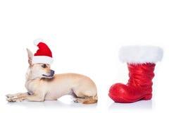 Weihnachten Santa Dog Lizenzfreies Stockfoto