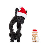 Weihnachten Santa Dog Stockbild