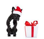 Weihnachten Santa Dog Lizenzfreie Stockfotos