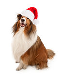 Weihnachten Santa Shetland Sheepdog lizenzfreie stockbilder