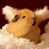 Weihnachten-Schwein stockbild
