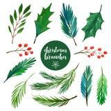 Weihnachten verzweigt sich Sammlung Lizenzfreie Stockfotos