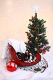 Weihnachtenchihuachua sitzt im Pferdeschlitten durch Weihnachtsbaum Lizenzfreie Stockfotografie
