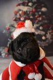 Weihnachtenpug Lizenzfreies Stockbild