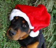Weihnachtenrottweiler lizenzfreie stockbilder