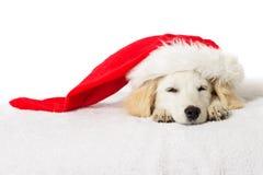 Weihnachts-Labrador-Welpenschlafen lizenzfreies stockfoto