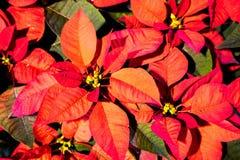 Weihnachts- oder des neuen Jahresdekoration: grüne Tannenzweige, Nuss, kleines Geschenk, Geschenkbogen und Glocke auf dem hölzern Stockfoto