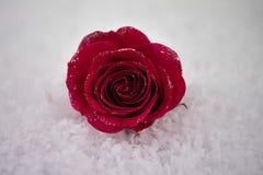 Weihnachts- oder des Valentinsgrußesblüht romantisches Wintersaisonphotographiebild der Rotrose im Schnee mit den Funkelnblumenbl lizenzfreies stockbild