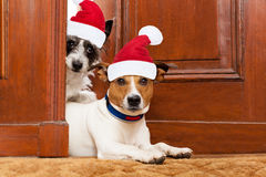 Weihnachts-Sankt-Hunde Lizenzfreie Stockfotos