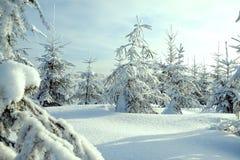 Weihnachts- und des neuen Jahresbäume bedeckt mit Schnee im Winterwald Lizenzfreie Stockbilder