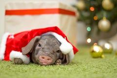 Weihnachts- und des neuen Jahreskarte mit nettem neugeborenem Sankt-Schwein im Geschenkpräsentkarton Dekorationssymbol des Jahr C Stockbilder