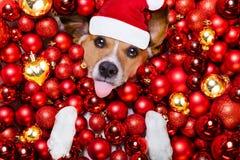 Weihnachts-Weihnachtsmann-Hunde- und -weihnachtsbälle als Hintergrund Stockfotografie