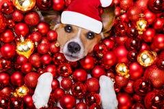 Weihnachts-Weihnachtsmann-Hunde- und -weihnachtsbälle als Hintergrund Stockbilder
