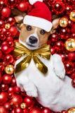 Weihnachts-Weihnachtsmann-Hunde- und -weihnachtsbälle als Hintergrund Stockfoto