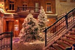 Weihnachtsbäume Stockbilder