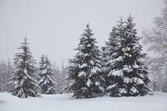 Weihnachtsbäume abgedeckt mit Schnee Lizenzfreie Stockfotos
