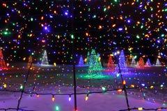 Weihnachtsbäume in den Lichtern Stockfotografie