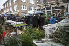 Weihnachtsbäume für Verkauf am Kolumbien-Straßenblumenmarkt in Bethnal grünen Lizenzfreies Stockbild