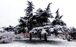 Weihnachtsbäume im Park stockfotos