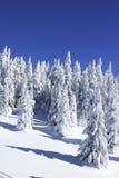 Weihnachtsbäume im Schnee Stockfoto