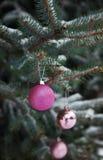 Weihnachtsball auf dem Niederlassungsbaum Stockbilder