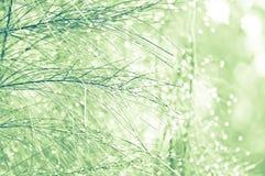 Weihnachtsbaum. Lizenzfreies Stockfoto