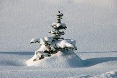 Weihnachtsbaum abgedeckt mit Schnee lizenzfreie stockfotografie