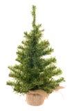 Weihnachtsbaum auf dem Weiß Stockfotos
