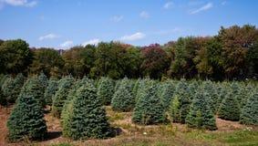 Weihnachtsbaum-Bauernhof Lizenzfreie Stockfotos