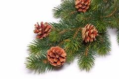 Weihnachtsbaum des neuen Jahres und Lizenzfreie Stockfotografie