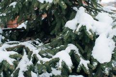 Weihnachtsbaum, die Kiefer, die mit Schnee, neues Jahr bedeckt wird, Winter ist Zeit lizenzfreie stockfotografie