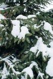 Weihnachtsbaum, die Kiefer, die mit Schnee, neues Jahr bedeckt wird, Winter ist Zeit lizenzfreies stockfoto