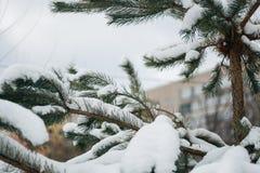 Weihnachtsbaum, die Kiefer, die mit Schnee, neues Jahr bedeckt wird, Winter ist Zeit stockbild