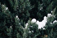 Weihnachtsbaum, die Kiefer, die mit Schnee, neues Jahr bedeckt wird, Winter ist Zeit lizenzfreie stockfotos