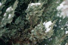 Weihnachtsbaum, die Kiefer, die mit Schnee, neues Jahr bedeckt wird, Winter ist Zeit stockfotos