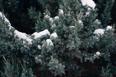 Weihnachtsbaum, die Kiefer, die mit Schnee, neues Jahr bedeckt wird, Winter ist Zeit stockbilder