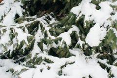 Weihnachtsbaum, die Kiefer, die mit Schnee, neues Jahr bedeckt wird, Winter ist Zeit lizenzfreie stockbilder