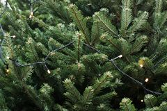 Weihnachtsbaum für Messe des Verkaufs im Freien mit Girlande Abbildung innen Abschluss oben Lizenzfreie Stockfotos