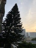 Weihnachtsbaum gelegen im Stadtgebiet, Hong Kong Stockbilder