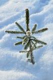 Weihnachtsbaum glaubt Kälte Lizenzfreie Stockbilder