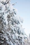 Weihnachtsbaum im Schnee Stockfotos
