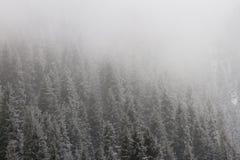 Weihnachtsbaum im Schnee in den Bergen Stockbild