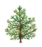 Weihnachtsbaum - Kiefer, gezierter Baum watercolor Lizenzfreie Abbildung