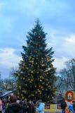 Weihnachtsbaum in Lemberg Stockbild