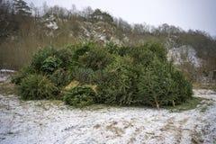 Weihnachtsbaum nach Chrismas Stockbilder