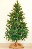 Weihnachtsbaum ohne irgendeine Dekoration Lizenzfreie Stockfotos